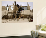 US Air Force Military Working Dog Sits on a US Army M2A3 Bradley Fighting Vehicle Plakater