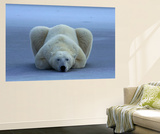 Polar Bear Print by Norbert Rosing