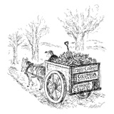 "A man drives a horse-drawn cart with bumper stickers reading: ""Columbia Un… - New Yorker Cartoon Premium Giclee Print by Edward Koren"