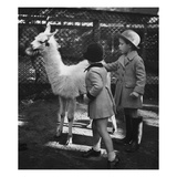 Vogue - November 1934 - Llama in a Petting Zoo Regular Photographic Print by Remie Lohse