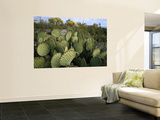 Prickly Pear Cactus Near Willows & Windmill at Dugout Well, Big Bend National Park, Texas, USA Prints by Scott T. Smith