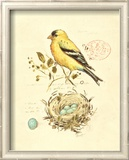 Gilded Songbird II Prints by Chad Barrett