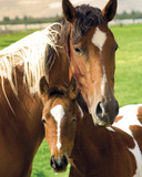 Mare and Foal Posters
