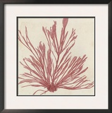 Brilliant Seaweed IX Prints