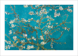 Van Gogh-Almond Blossom Kunstdrucke