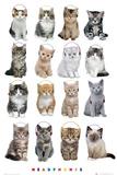 Kimberlin- Kittens Headphones Photo