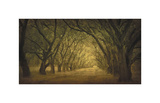 Evergreen, New Alley, Right Side Giclée-tryk af William Guion