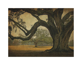 Two Oaks in Rain, Audubon Gardens Giclee Print by William Guion