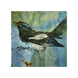 Magpie No. 1 Giclee Print by John Golden