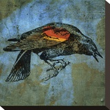 Red Wing Blackbird No. 1 Stretched Canvas Print by John Golden