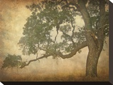 Oak in Fog, Study 1 Stretched Canvas Print by William Guion