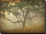 Oak in Fog Study 13 Reproduction transférée sur toile par William Guion
