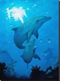 Delfines y marsopas Reproducción en lienzo de la lámina por Dan Scholz