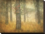 Oak Grove in Fog, Study 26 Stretched Canvas Print by William Guion