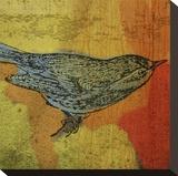 Warbler No. 1 Reproduction transférée sur toile par John Golden