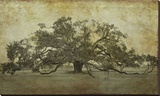Sugarmill Oak, Louisiana Stretched Canvas Print by William Guion