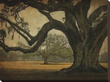 Two Oaks in Rain, Audubon Gardens Stretched Canvas Print by William Guion