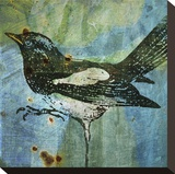 Magpie No. 1 Stretched Canvas Print by John Golden