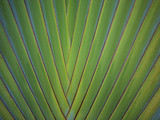 Close-Up of Palm Leaves, Bavaro, Punta Cana, Dominican Republic Photographic Print by Jim Engelbrecht