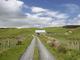 Track and Farm Building, Near Lake Ferry, Wairarapa, North Island, New Zealand Photographic Print by David Wall