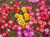 Colourful Flowers, Marine Parade, Napier, Hawkes Bay, North Island, New Zealand Photographic Print by David Wall