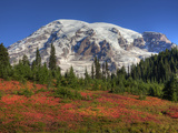 Paradise Valley and Mt. Rainier, Mt. Rainier National Park, Washington, Usa Photographic Print by Jamie & Judy Wild