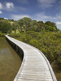 Boardwalk across Mangroves, Sandspit, Warkworth, Auckland Region, North Island, New Zealand Photographic Print by David Wall