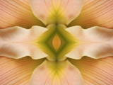 Flipped Pattern, Hybrid Daylily Photographic Print by Adam Jones