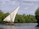 Dhow Sailing in Mangrove Channel, Lamu, Kenya Fotodruck von Alison Jones