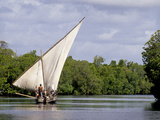 Dhow Sailing in Mangrove Channel, Lamu, Kenya Photographic Print by Alison Jones