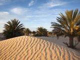 Great Dune at Dawn, Douz, Sahara Desert, Tunisia Fotografisk tryk af Walter Bibikow
