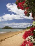 Pohutukawa Tree and Beach, Paihia, Bay of Islands, Northland, North Island, New Zealand Reproduction photographique par David Wall
