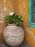 Flower in Pot, Crete, Greece Photographic Print by Adam Jones