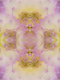 Flipped Pattern, Dahlia Flowers, Birmingham, Alabama Photographic Print by Adam Jones