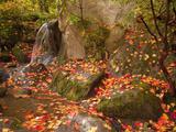 Japanese Garden, Washington Park Arboretum, Seattle, Washington, Usa Photographic Print by Jamie & Judy Wild