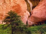 View of Double-Arch Alcove, Zion National Park, Utah, Usa Photographic Print by Dennis Flaherty