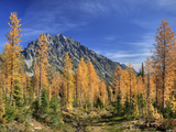 Mt. Stuart with Golden Larch Trees, Alpine Lakes Wilderness, Washington, Usa Photographic Print by Jamie & Judy Wild