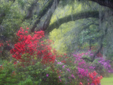 Spring Azaleas at Magnolia Plantation and Gardens, Charleston, South Carolina, Usa Photographic Print by Joanne Wells