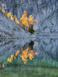 Golden Larch Trees, Enchantment Lakes, Alpine Lakes Wilderness, Washington, Usa Photographic Print by Jamie & Judy Wild