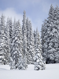 Snow-Covered Fir Trees, Mount Rainier National Park, Washington, Usa Photographic Print by Jamie & Judy Wild