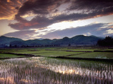 Rice Paddy Refects the Evening Skynear Kyaing Tong, Burma Photographic Print by Brian McGilloway