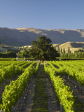 Wooing Tree Vineyard, Cromwell, Central Otago, South Island, New Zealand Photographic Print by David Wall