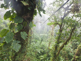 Monteverde Cloud Forest Reserve, Selvatura Adventure Park, Costa Rica Photographic Print by Jim Goldstein