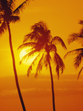 Sunset with Palm Tree, Hawaii, Usa Photographic Print by Douglas Peebles