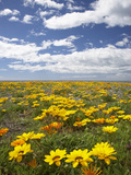 Wildflowers, Marine Parade, Napier Waterfront, Hawkes Bay, North Island, New Zealand Photographic Print by David Wall
