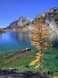 Golden Larch Tree, Enchantment Lakes, Alpine Lakes Wilderness, Washington, Usa Photographic Print by Jamie & Judy Wild