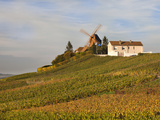 Windmill and Vineyards, Verzenay, Champagne Ardenne, Marne, France Photographic Print by Walter Bibikow