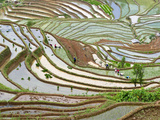 Native Yi People Plant Flooded Rice Terraces Near Laomeng Town, Jinping, Yunnan, China Photographic Print by Charles Crust