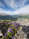 Alpine Flowers and Views of Celerina and St. Moritz from Atop Muottas Muragl, Switzerland Photographic Print by Michael DeFreitas