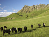 Cows and Farmland Below Te Mata Peak, Hawkes Bay, North Island, New Zealand Photographic Print by David Wall